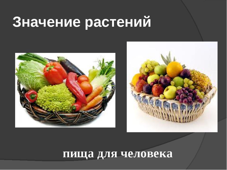 Значение растений пища для человека