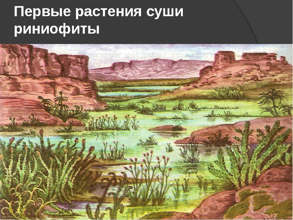 Первые растения суши риниофиты