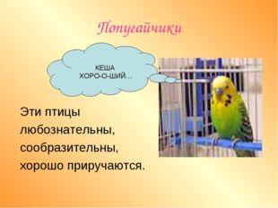 Попугайчики   Эти птицы любознательны, сообразительны, хорошо приручаются.