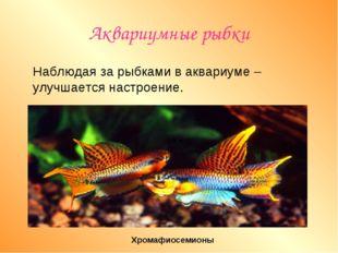 Аквариумные рыбки Наблюдая за рыбками в аквариуме –улучшается настроение. Хро
