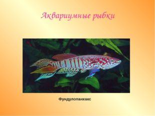 Аквариумные рыбки Фундулопанхакс