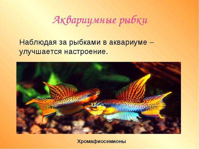 Аквариумные рыбки Наблюдая за рыбками в аквариуме –улучшается настроение. Хро...