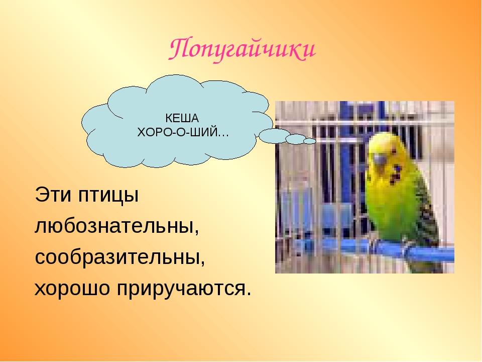 Попугайчики   Эти птицы любознательны, сообразительны, хорошо приручаются....