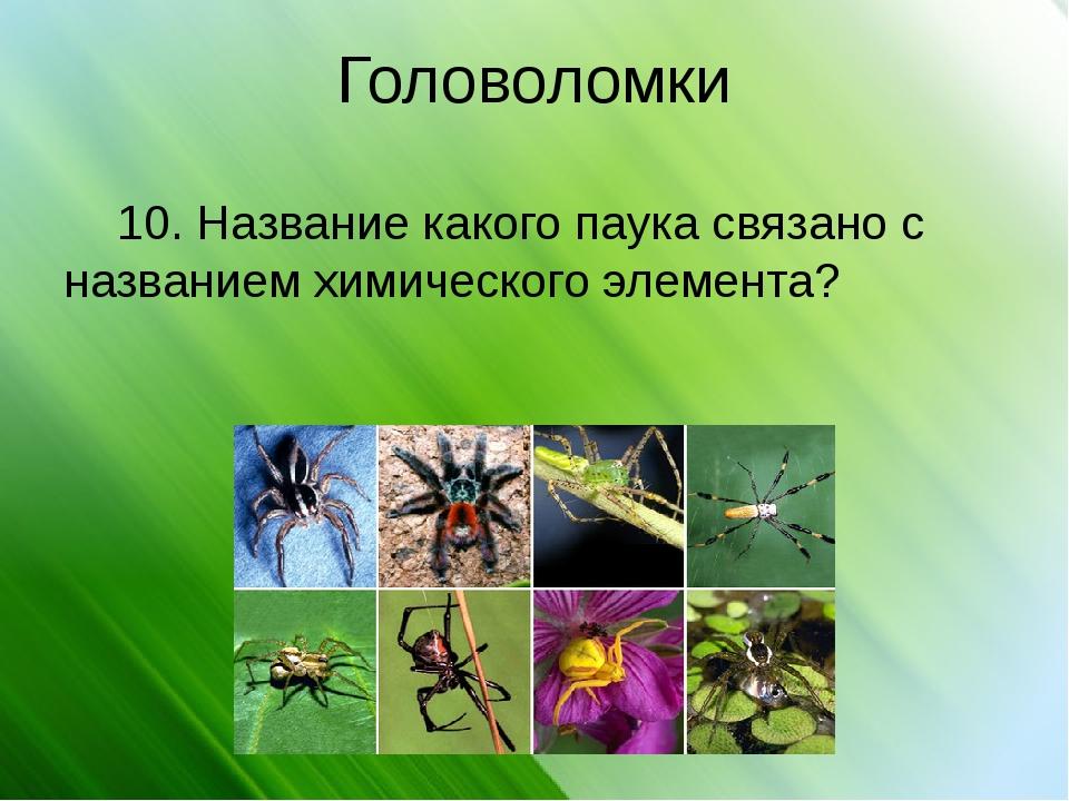 Головоломки 10. Название какого паука связано с названием химического элемента?
