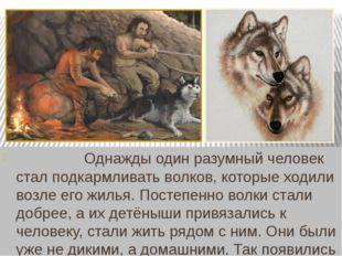 Однажды один разумный человек стал подкармливать волков, которые ходили во
