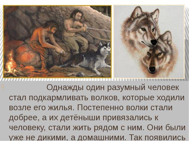 Однажды один разумный человек стал подкармливать волков, которые ходили во...