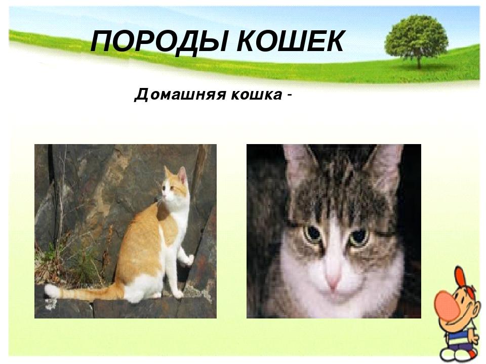 ПОРОДЫ КОШЕК Домашняя кошка -