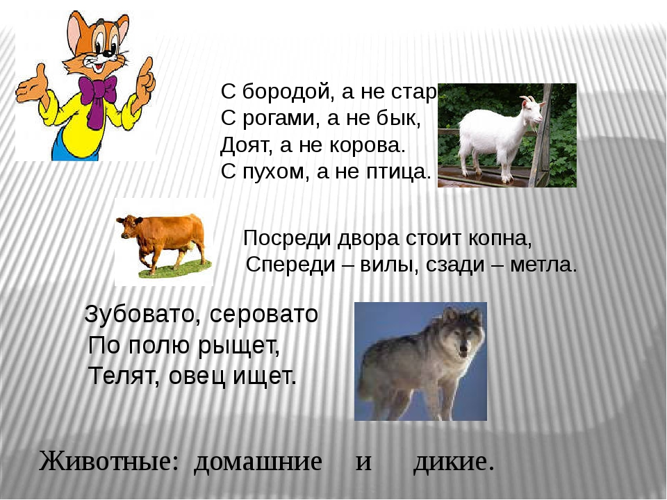 С бородой, а не старик. С рогами, а не бык, Доят, а не корова. С пухом, а не...
