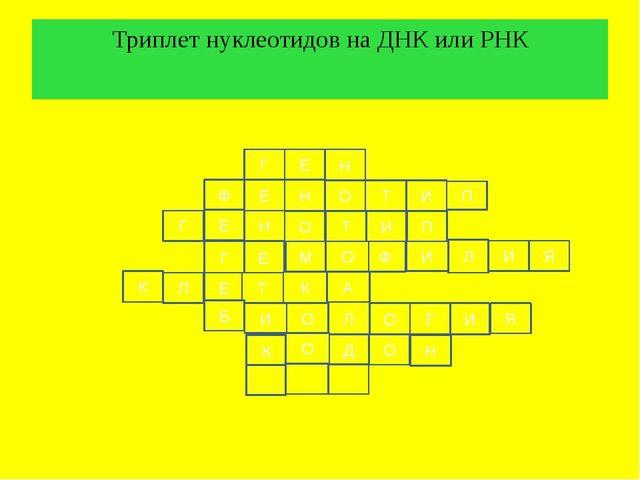 Триплет нуклеотидов на ДНК или РНК Г Е Н Ф Е Н Т О И О Н Е Г П И Ф О М Е Г П...