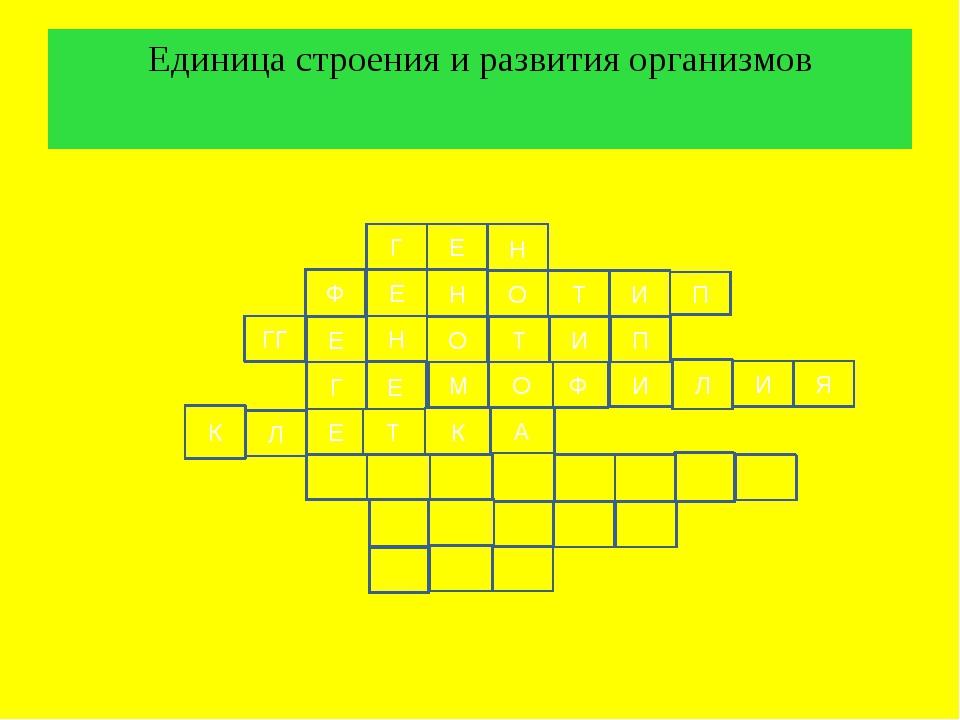 Единица строения и развития организмов Г Е Н Ф Е Н Т О И О Н Е ГГ П И Ф О М Е...