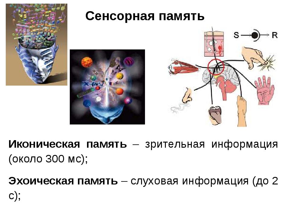 Сенсорная память Иконическая память – зрительная информация (около 300 мс); Э...