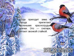 Когда приходит зима в города прилетают маленькие красногрудые птички. Это —