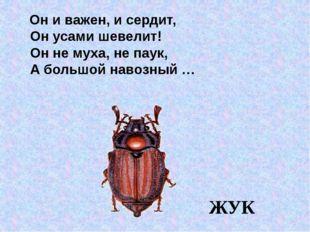 Он и важен, и сердит, Он усами шевелит! Он не муха, не паук, А большой навоз