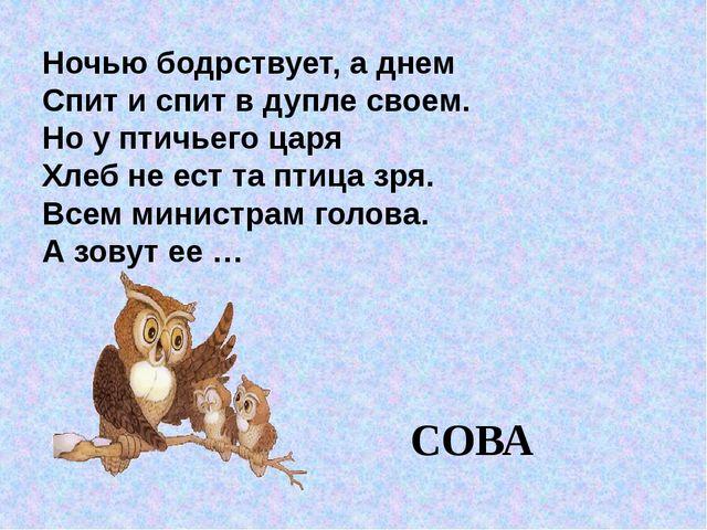 Ночью бодрствует, а днем Спит и спит в дупле своем. Но у птичьего царя Хлеб н...