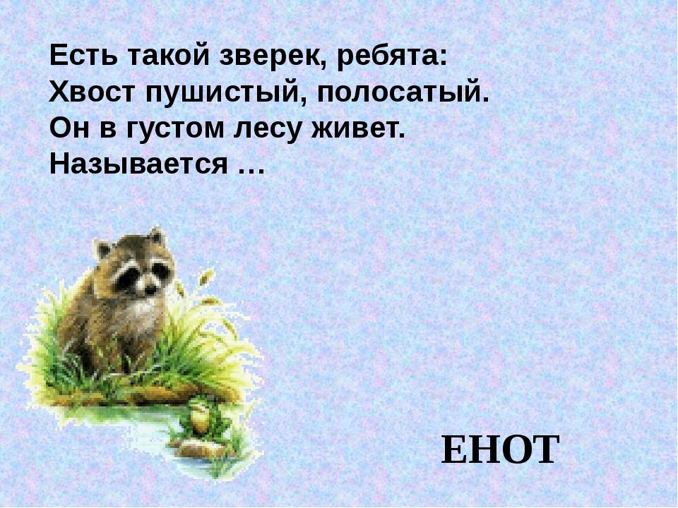 Есть такой зверек, ребята: Хвост пушистый, полосатый. Он в густом лесу живет...