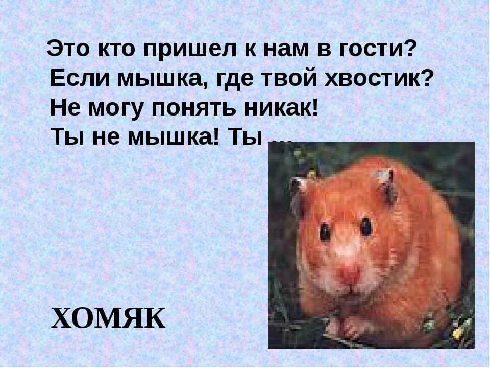 Это кто пришел к нам в гости? Если мышка, где твой хвостик? Не могу понять н...