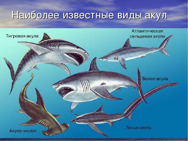 Наиболее известные виды акул