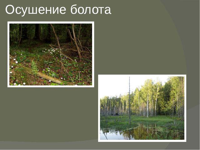 Осушение болота