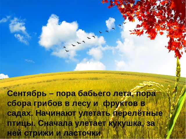 Сентябрь – пора бабьего лета, пора сбора грибов в лесу и фруктов в садах. Нач...