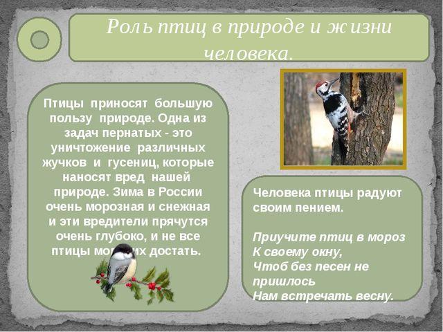 Роль птиц в природе и жизни человека. Птицы приносят большую пользу природе....