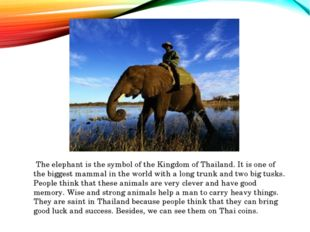 The elephant is the symbol of the Kingdom of Thailand. It is one of the bigg