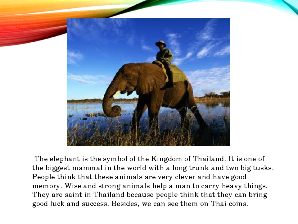 The elephant is the symbol of the Kingdom of Thailand. It is one of the bigg...