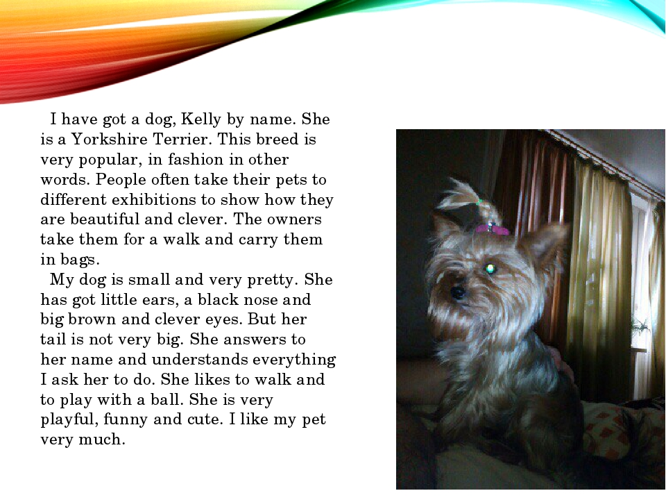 I have got a dog, Kelly by name. She is a Yorkshire Terrier. This breed is v...