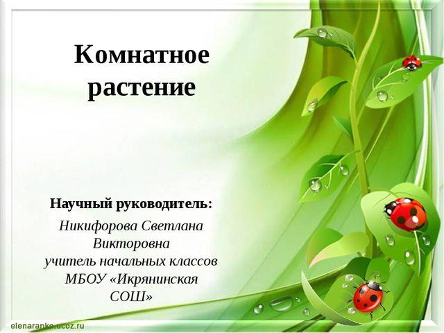 Комнатное растение Научный руководитель: Никифорова Светлана Викторовна учите...