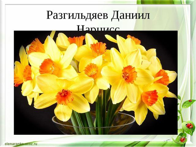 Разгильдяев Даниил Нарцисс