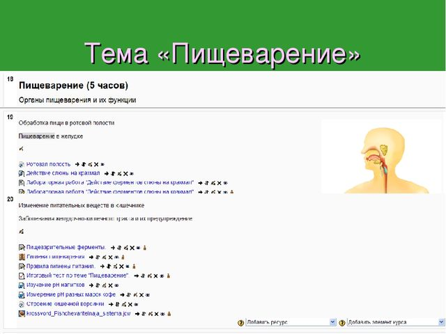 Тема «Пищеварение» В программе А.И. Никишова на нее отводится 5 часов. В инфо...