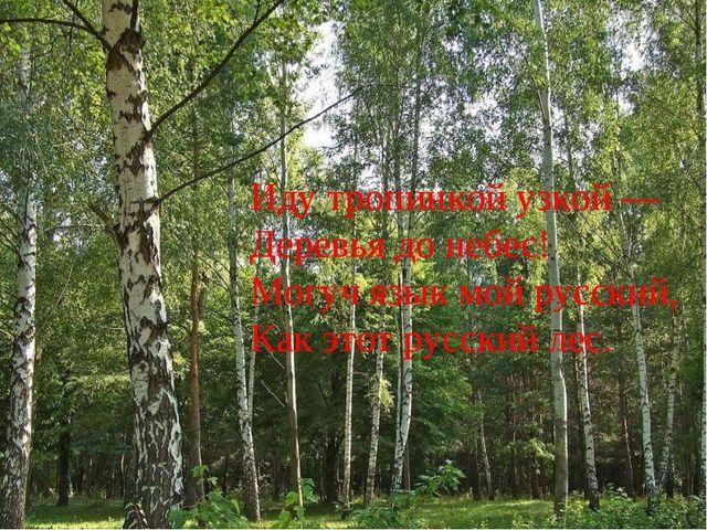 Иду тропинкой узкой — Деревья до небес! Могуч язык мой русский, Как этот р...
