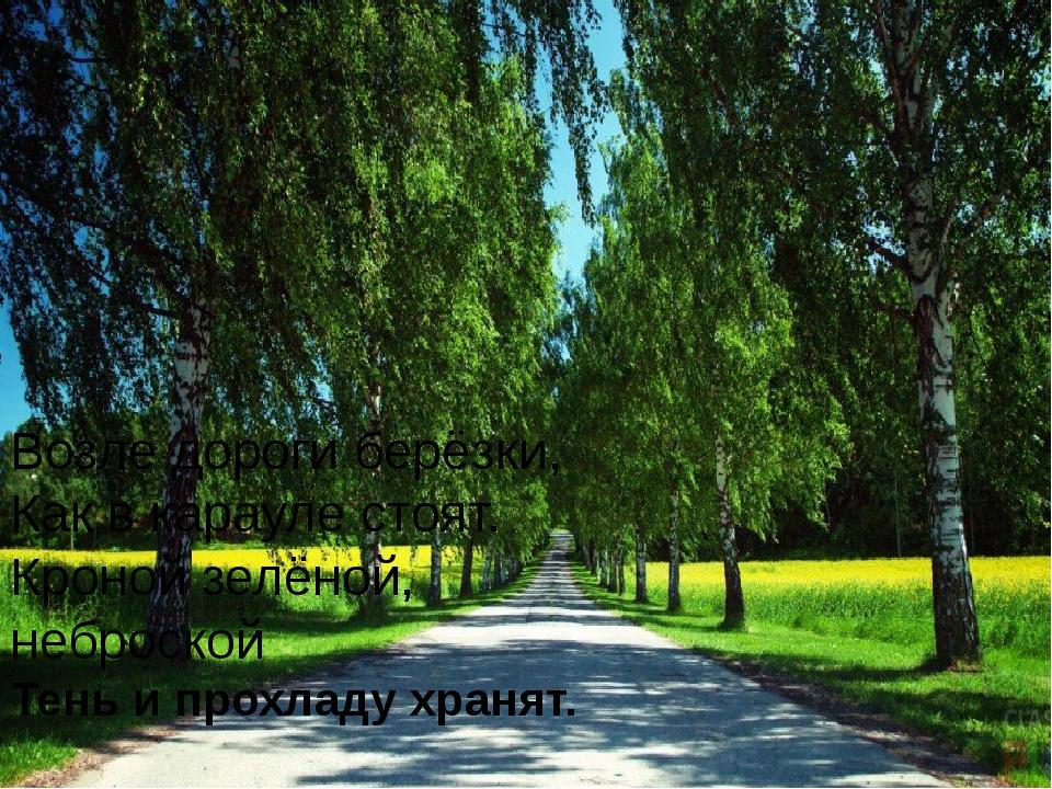 Возле дороги берёзки, Как в карауле стоят. Кроной зелёной, неброской Тень и п...
