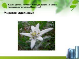 Какой цветок, согласно легенде, вырос на крови прикованного к скале Прометея?