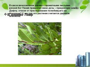 В какое вечнозеленое дерево с ароматными листьями речной бог Пеней превратил
