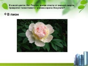 В какой цветок бог Плутон, желая спасти от верной смерти, превратил талантлив