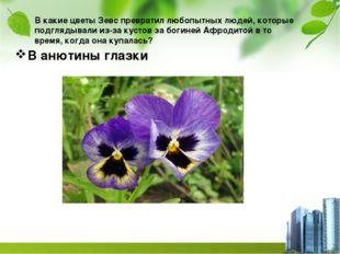 В какие цветы Зевс превратил любопытных людей, которые подглядывали из-за кус