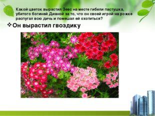 Какой цветок вырастил Зевс на месте гибели пастушка, убитого богиней Дианой з