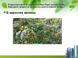 В зарослях какой ягоды на горе Иде Парис вручил яблоко Афродите, предпочтя ее
