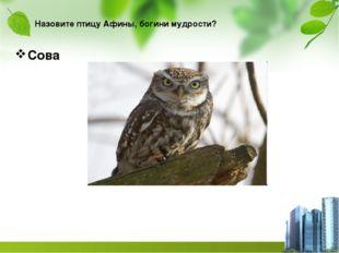 Назовите птицу Афины, богини мудрости? Сова
