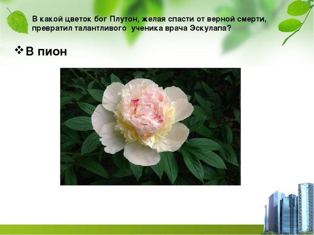В какой цветок бог Плутон, желая спасти от верной смерти, превратил талантлив...