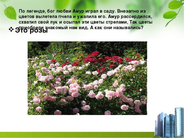 По легенде, бог любви Амур играл в саду. Внезапно из цветов вылетела пчела и...