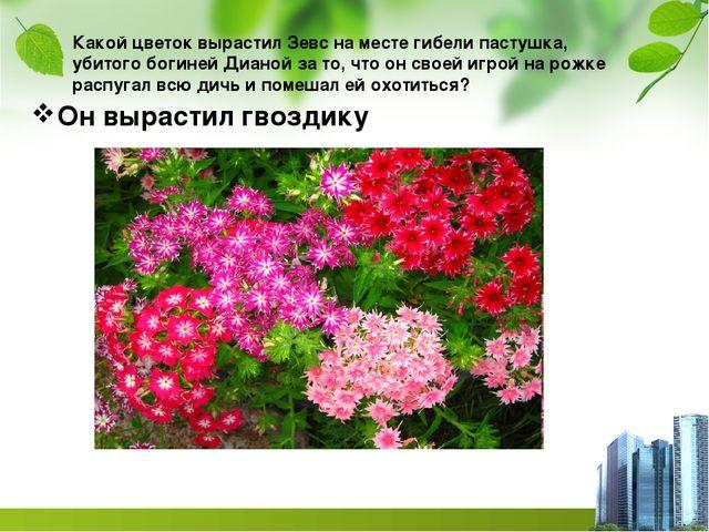 Какой цветок вырастил Зевс на месте гибели пастушка, убитого богиней Дианой з...
