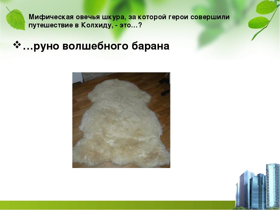 Мифическая овечья шкура, за которой герои совершили путешествие в Колхиду, -...