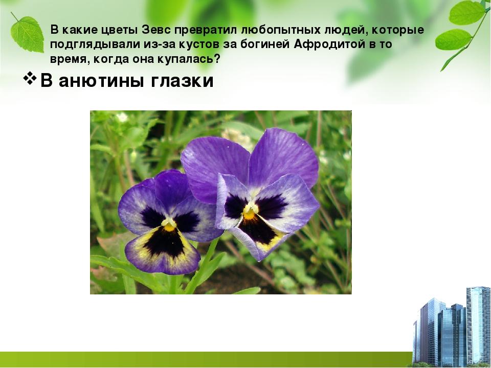 В какие цветы Зевс превратил любопытных людей, которые подглядывали из-за кус...