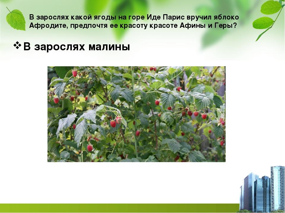 В зарослях какой ягоды на горе Иде Парис вручил яблоко Афродите, предпочтя ее...