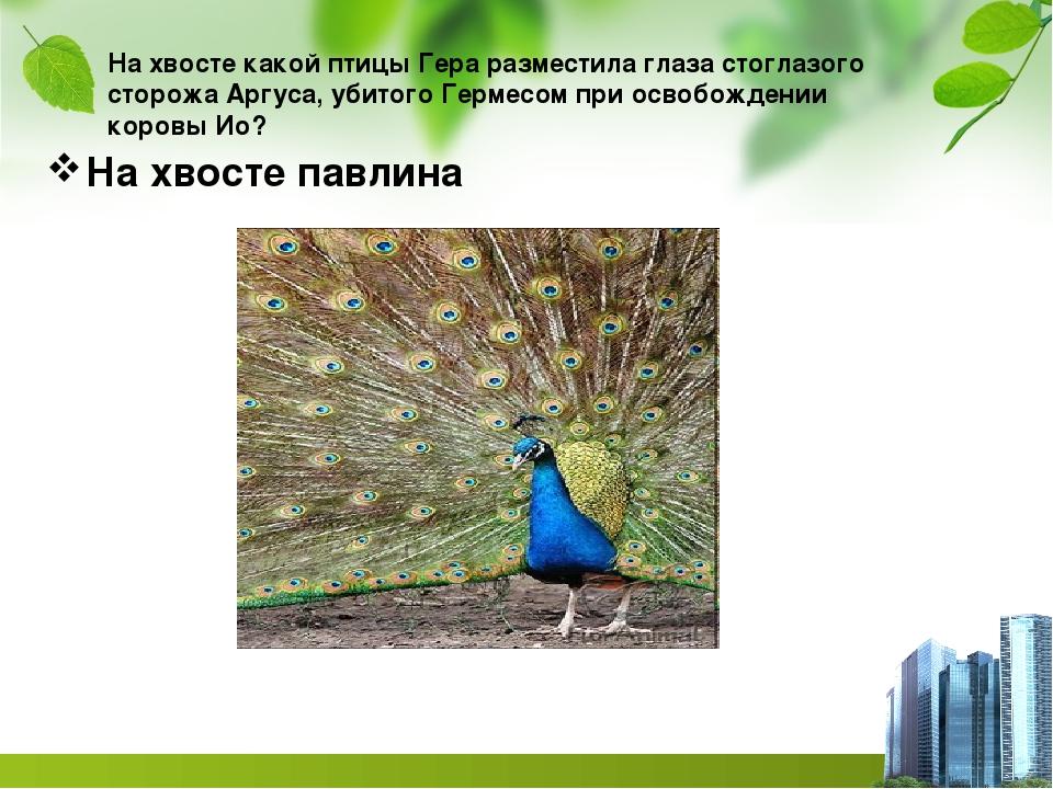 На хвосте какой птицы Гера разместила глаза стоглазого сторожа Аргуса, убитог...