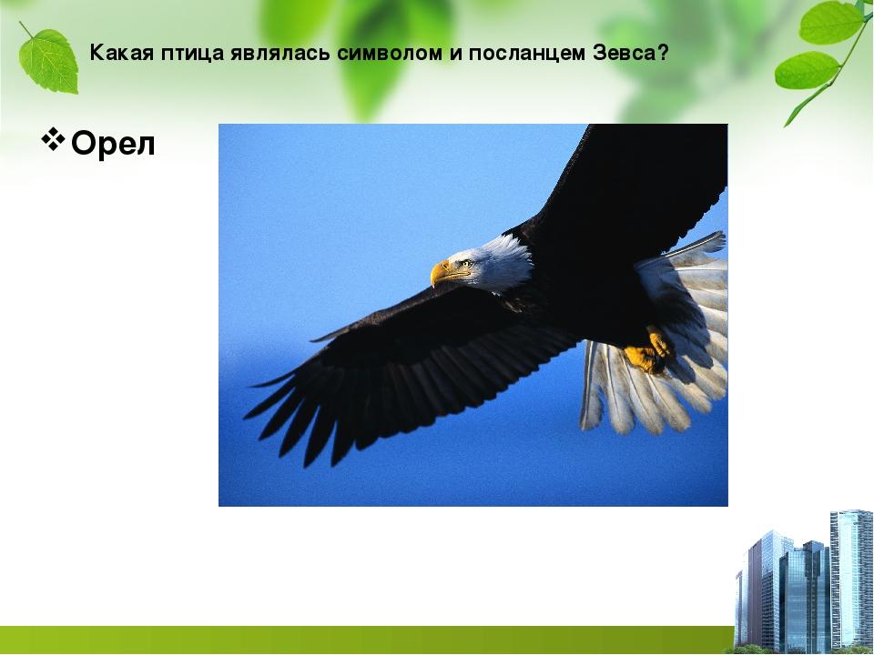 Какая птица являлась символом и посланцем Зевса? Орел