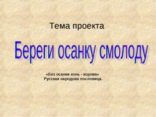 Тема проекта «Без осанки конь - корова» Русская народная пословица.