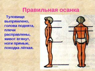 Правильная осанка Туловище выпрямлено, голова поднята, плечи расправлены, жи