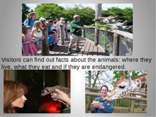 Visitors can find out facts about the animals: where they live, what they eat